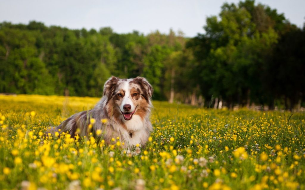 6797612-happy-dog-wallpaper